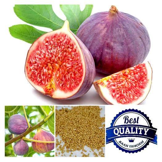 ราคา เมล็ดพืช Seeds มะเดื่อฝรั่ง Turkey Fig Fruit เมล็ดพันธุ์ พรรณไม้ คุณภาพนำเข้า 50 เมล็ด Seeds Thailand