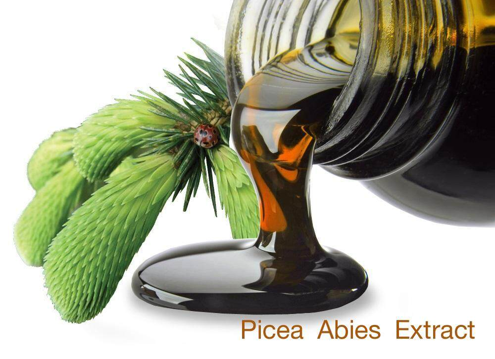 Picea-Abies-Extractป.jpg