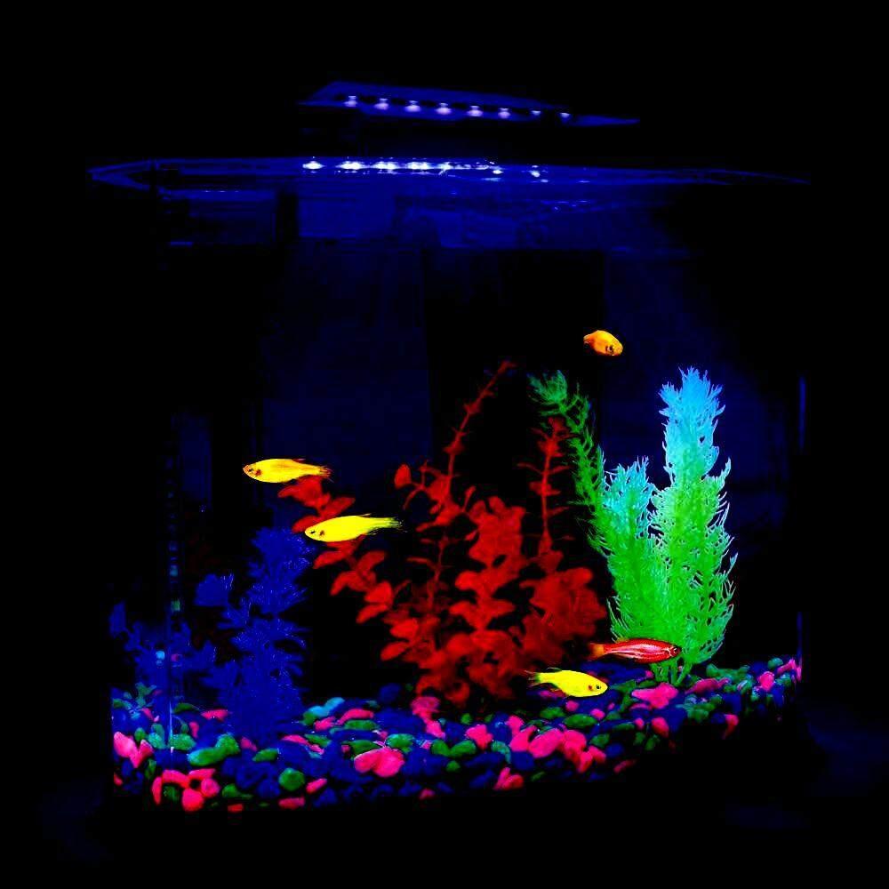 หินรองพื้นตู้ปลา หินสะท้อนแสง !! สร้างธีมตู้ปลาตามจินตนาการของคุณได้ตามใจ ด้วยงานหินกรวดเทรองพื้นชนิดก้อนกลมสะท้อนแสงจำนวน 1 กิโลกรัม