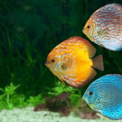 Esamrt ชุดซ่อมอุปกรณ์ปั้มลม ออกซิเจน สำหรับเลี้ยงกุ้ง เลี้ยงปลา ลูกยางปั้มลมออกซิเจนเพร้อมสายยาง