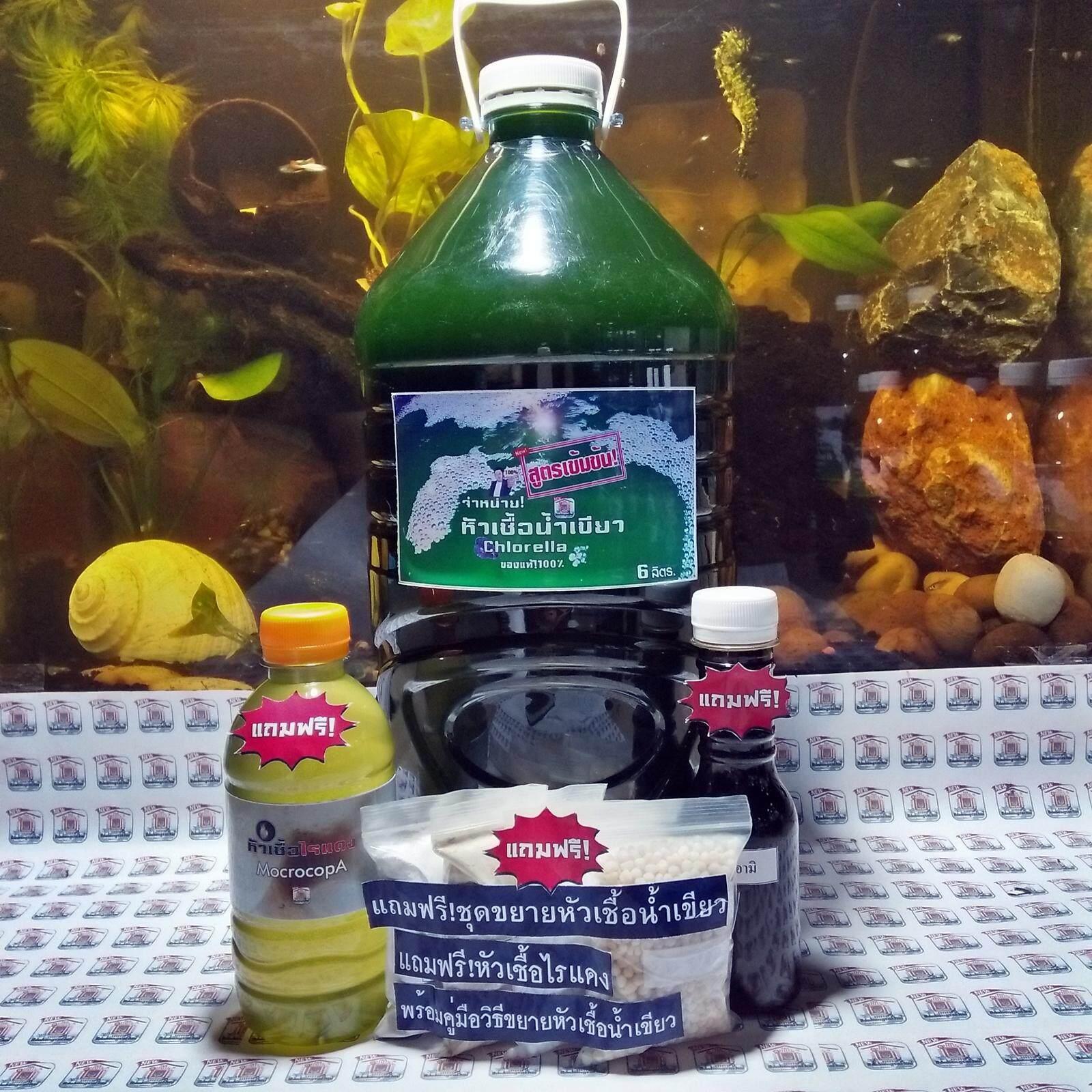 หัวเชื้อน้ำเขียว สาหร่ายคลอเรลล่า สูตรเข้มข้น! ปริมาณขนาด 6 ลิตร.(แถมฟรี!ชุดขยายสำหรับเพาะหัวเชื้อน้ำเขียว)