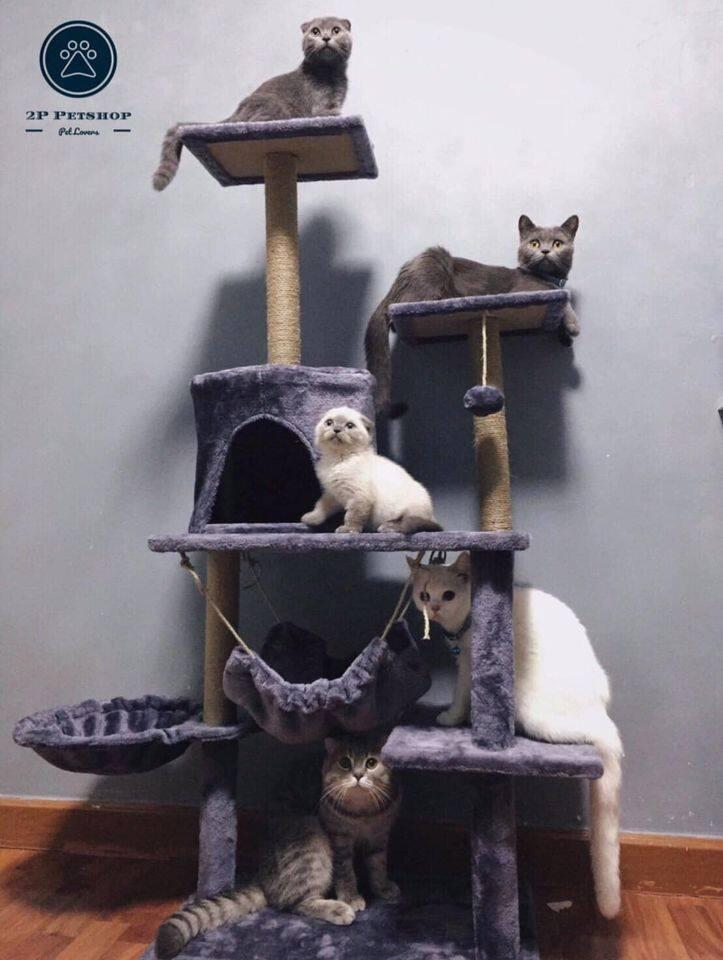 จัดส่ง Free !! วันนี้ พร้อมส่ง..คอนโดแมว สูง 130 Cm. (มาใหม่ 7 สี) ราคาพิเศษ !!.