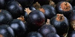 Top Note: Cassis