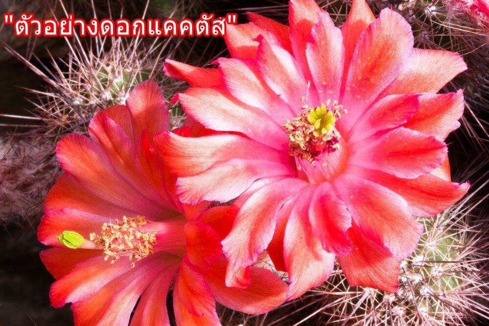 cactus-789099_1920.jpg