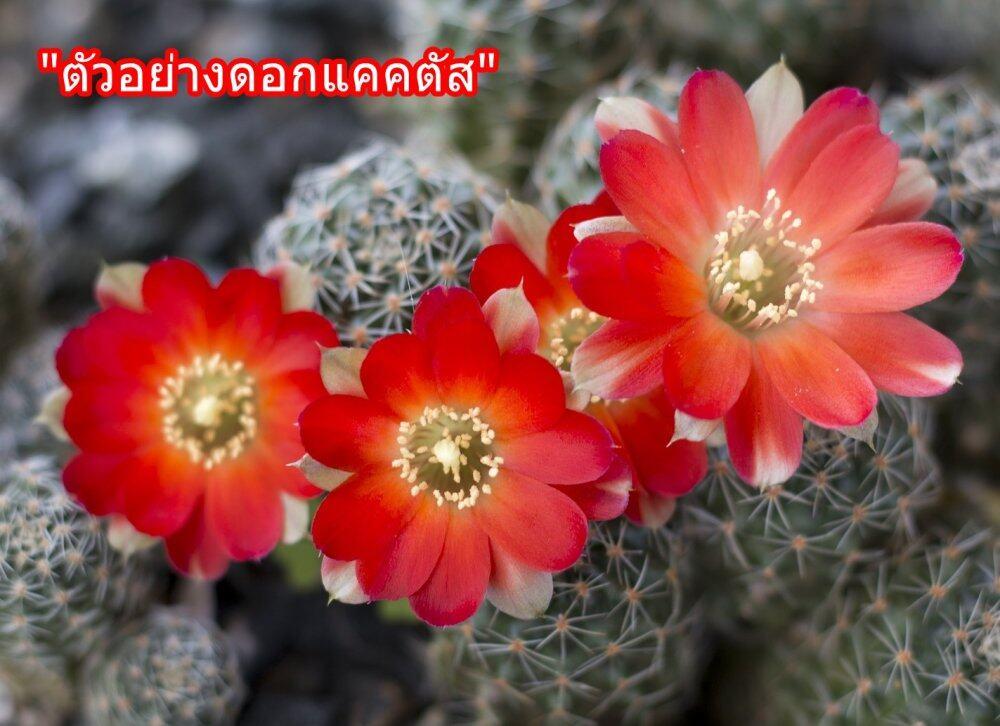 cactus-2549583_1920.jpg