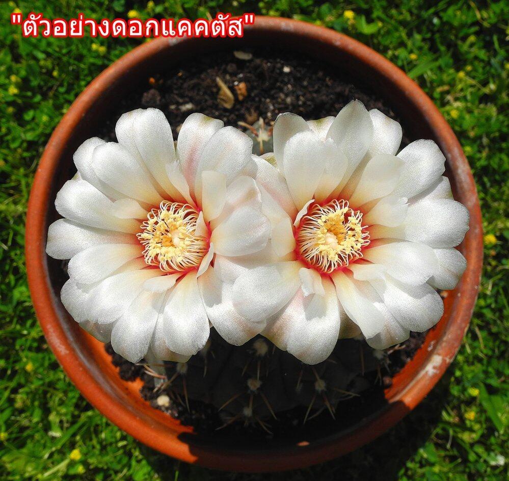 cactus-2454013_1920.jpg